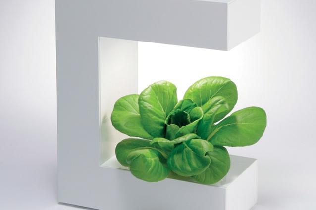 Akarina hydroponic benchtop lamp.