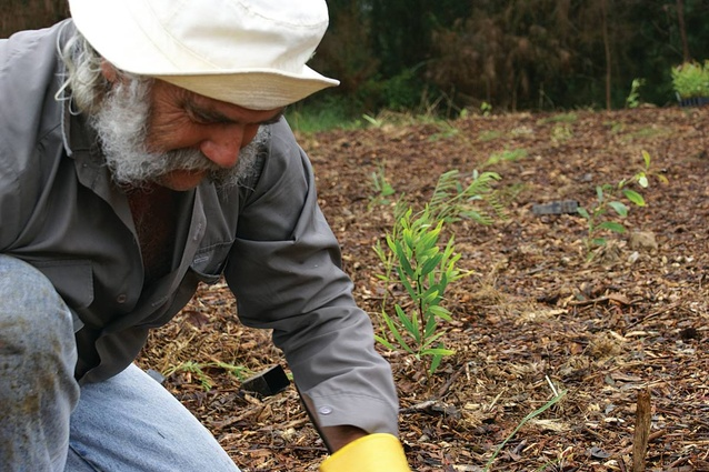 Forests are planted by the local community.