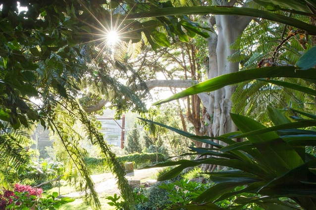 Wendy Whitely has for more than 20 years worked on developing a public garden, her secret garden, at Lavender Bay in Sydney.