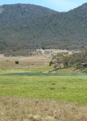 Swamps like Bogong Creek provided rushes useful in basket-making.