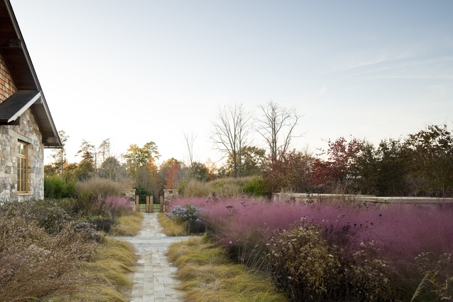 Native Meadow, Virginia by Nelson Byrd Woltz Landscape Architects. <i>‎Muhlenbergia capillaris</i> (pink muhly grass), creates a pink wash across the horizon when it's in bloom.
