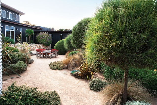 Silvery timber and tough cream-green-grey plants at the Karkalla Garden by Fiona Brockhoff.