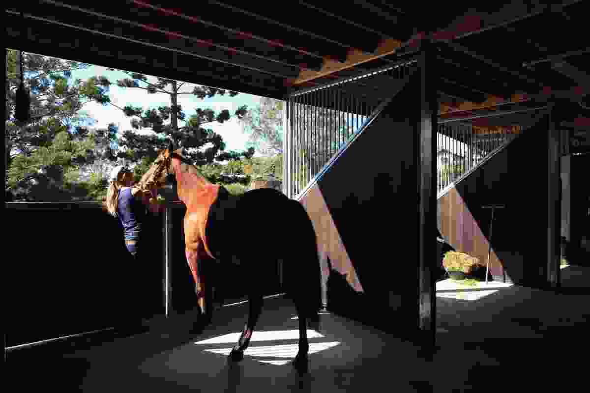 The two levels of the facility have been designed so that the clinic can be used to treat both large and domestic animals.