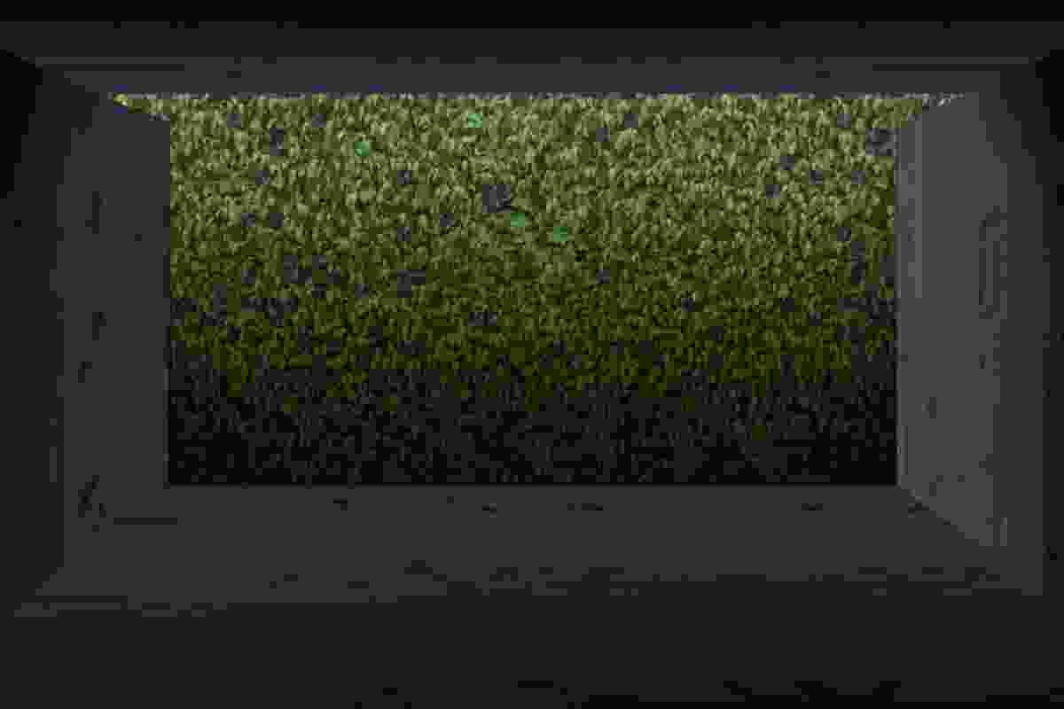 Landscape as structure: a render of the view looking through to rose apple hedge.