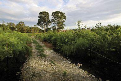 Rouse Hill Landscape Restoration.