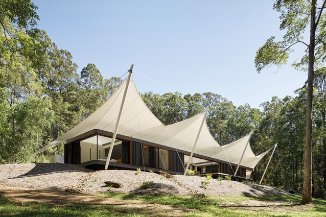 The fluid curves of the canopy structure sit within a small clearing, surrounded by a forty-metre-tall vestigial landscape.