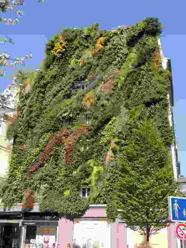 One of Patrick Blanc's most loved vertical gardens, the Oasis d Aboukir, Paris.