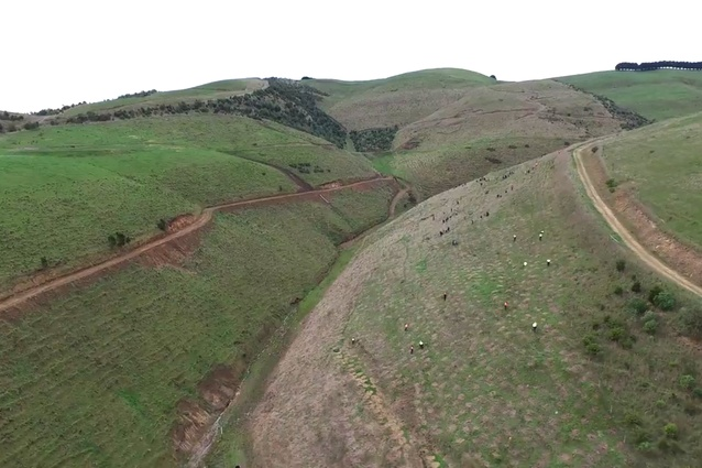 Volunteers at work planting trees in the steep valley.