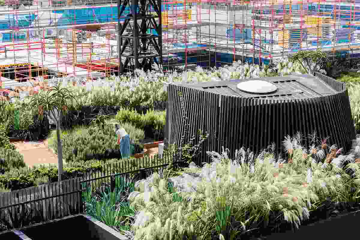 A densely planted rooftop garden on the fourth floor of the complex choreographs native grasses with feature planting to create an immersive space for residents to linger in and explore.