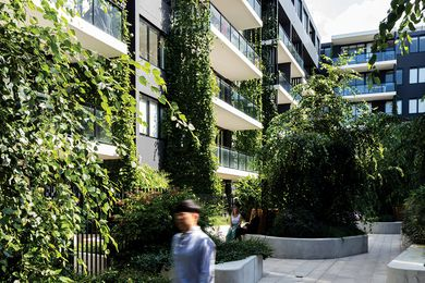 Within the communal courtyard of the Eve Apartments plantings of blue thunbergia, star jasmine and kangaroo vine provide privacy and passive cooling benefits to the project's residents.