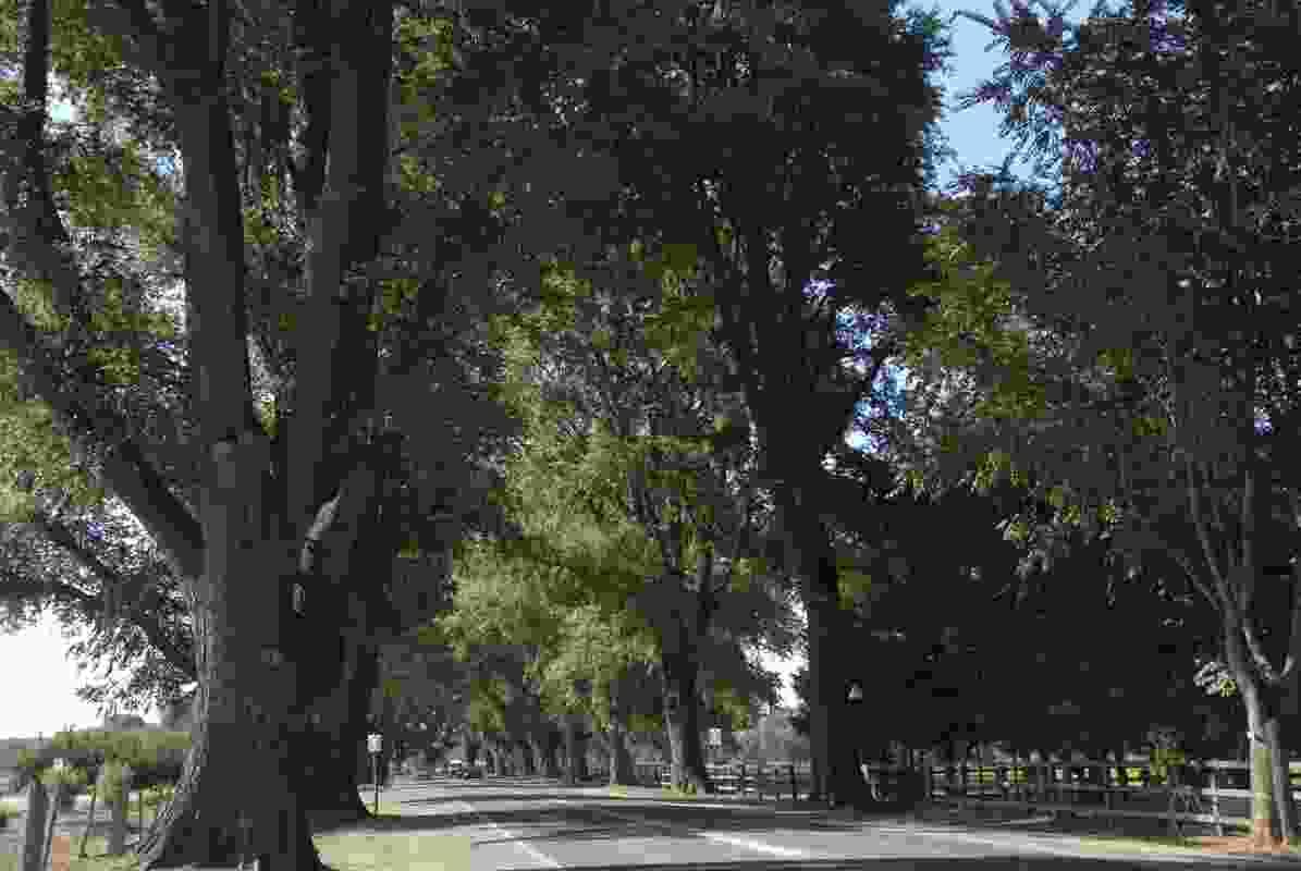 The 2020 Victorian Tree of the Year winner – Bacchus Marsh Avenue of Honour, Bacchus Marsh