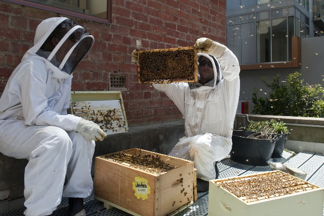 Vanessa (left) and Mat (right) assess the health of their Melbourne rooftop hives.