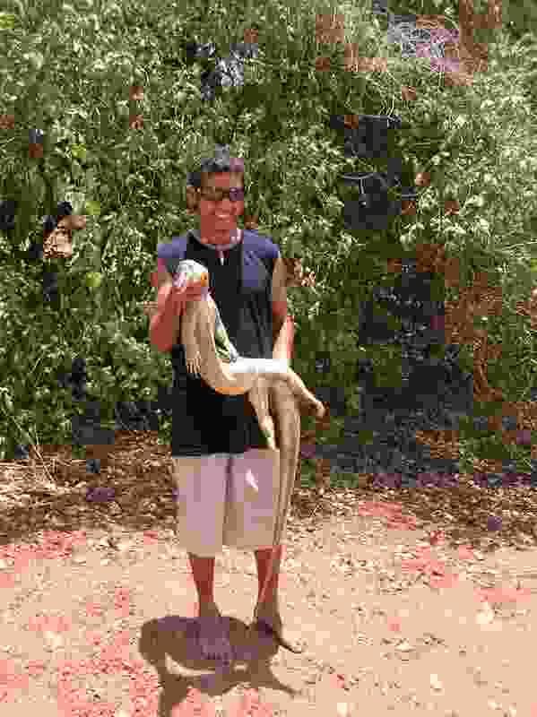 Roy Charlie holding jarlangardi he caught at the beach at Yardugarra.