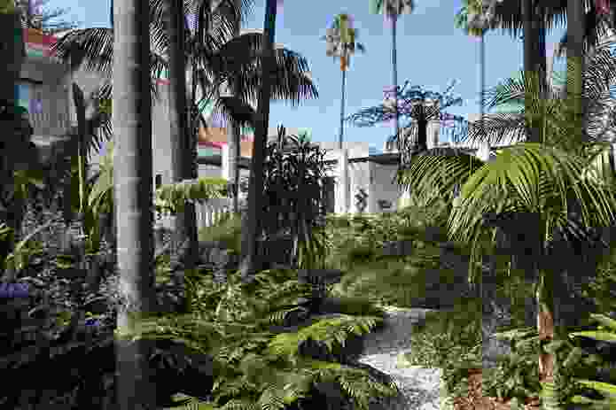 """A """"rambling mass of leaves and fronds dips gently beneath a stand of soaring palms."""""""