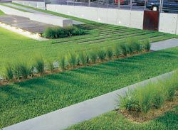 Plantings keep the sand filters stable and assist with the uptake of nitrogenous waste.