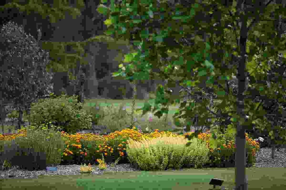 The newly planted Golden Garden at the Bendigo Botanic Gardens.