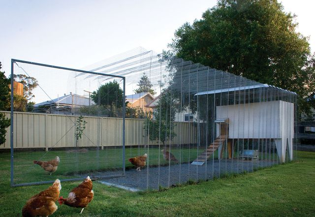 The coop is a self-supporting, frameless, galvanized steel mesh structure.