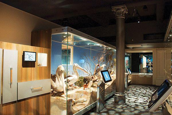 2011 Collaborative Design Award recipient: South Australian Museum Biodiversity Gallery by Grieve Gillett.