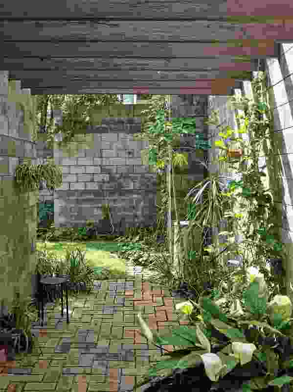 Sunshine entering the vine-covered patio to the north is filtered for a soft quality of light.