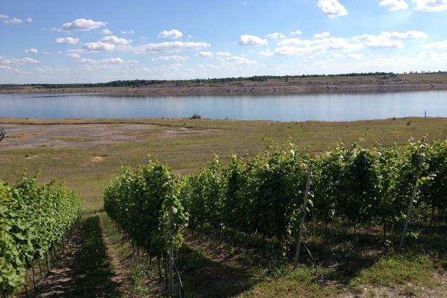 A vineyard at Lusatia pit lake, Germany.