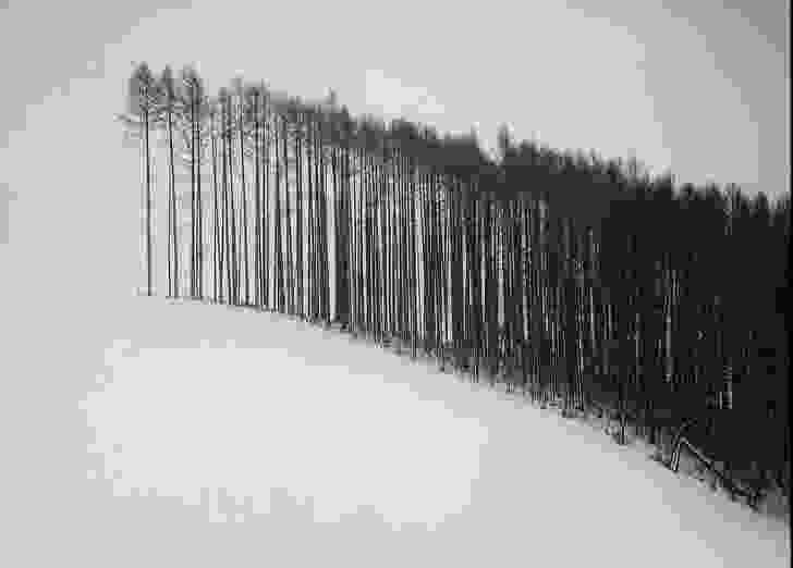Forest Edge, Hokkaido, Japan, 2004 – from the Japan series. In NBW's design for Houston Memorial Park large-scale pine plantings will be felled upon reaching maturity in an act designed to remember and honour the soldiers who lost their lives overseas.