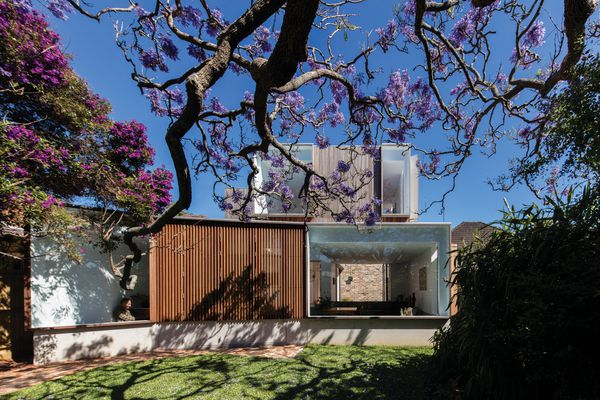 The neatness of the facade's spotted-gum battens and crisply framed windows is offset by thick jacaranda branches that twist across the garden.