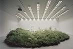 Cross-pollination, migration, adaptation: Australia's fragile grasslands at the Venice Biennale