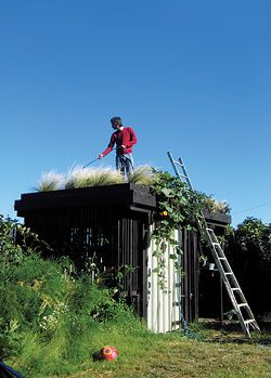 N°6 Watering the planted roof.