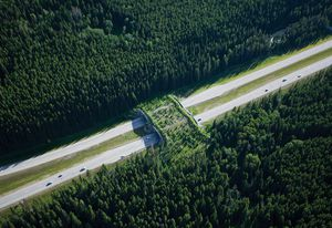 The animal crossing overpass in Banff National Park, part of the Yellowstone to Yukon Conservation Initiative.