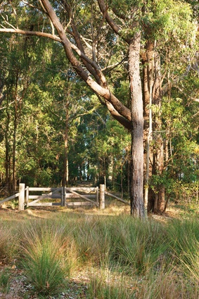A timber gate at the threshold of the dry spotted gum and ironbark forest.