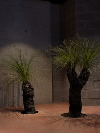Xanthorrhoea trees (grass trees) are set into the floor at the restaurant.