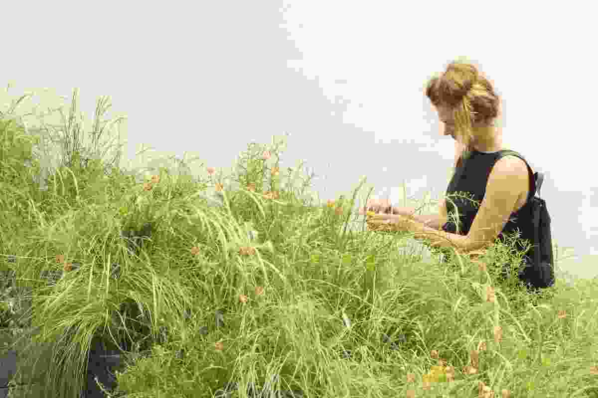 Australia's exhibition at the 2018 Venice Architecture Biennale, Repair, by creative directors Baracco and Wright Architects and Linda Tegg features 10,000 plants of the Victorian Western Plains Grasslands.