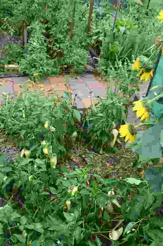 A rampant vegetable garden feeds the household.