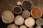 Woodcare colour wheel