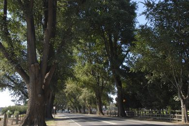 The 2020 Victorian Tree of the Year winner – Bacchus Marsh Avenue of Honour, Bacchus Marsh