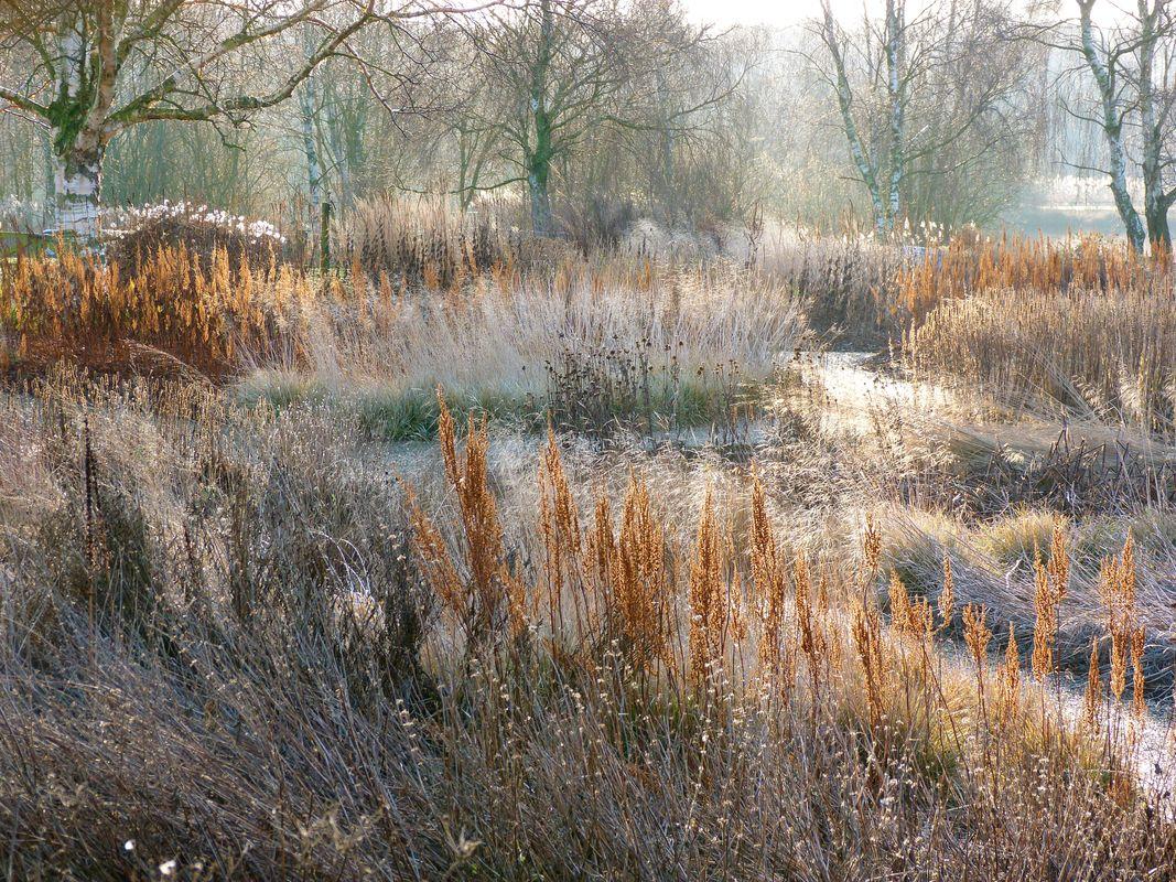 Oudolf Hummelo A Journey Through A Plantsman S Life Landscape