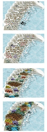 Coral growth and development over time.