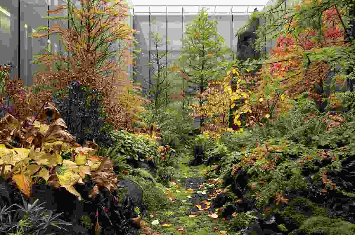 Autumn at Home of FIFA: planting registers ongoing growth, seasonality and change.