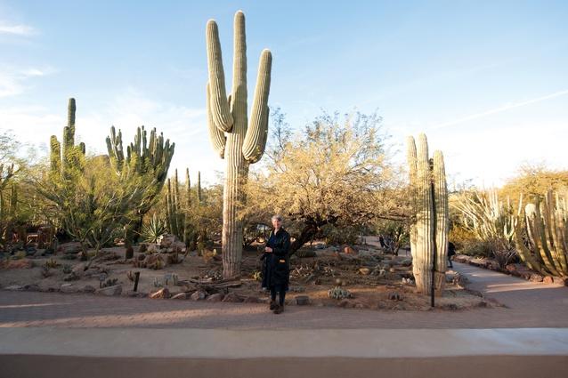 Catherine Rush lends scale to naturally occurring Carnegiea gigantea at Desert Botanical Garden in Phoenix, USA.