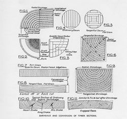 """""""The shrinkage and conversion of timber sections"""", one of many technical pieces to be published in the journal's pages. Architecture, June 1934."""