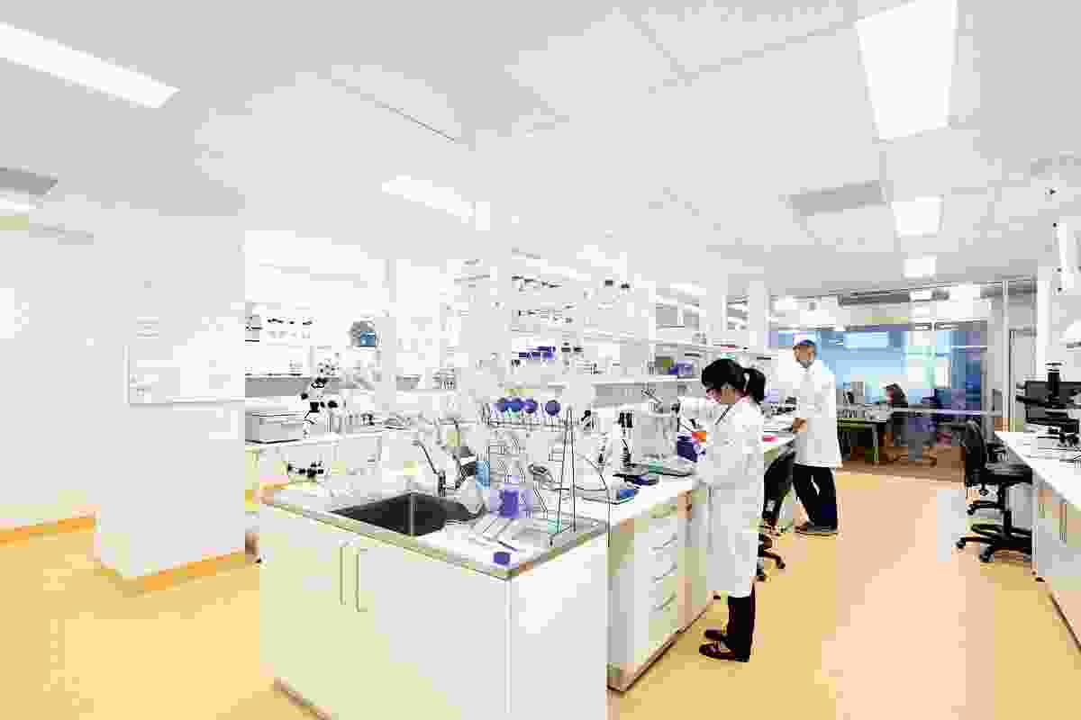 Laboratories occupy the top two floors. Diffused light from the floor-to-ceiling glass walls illuminates the working areas.