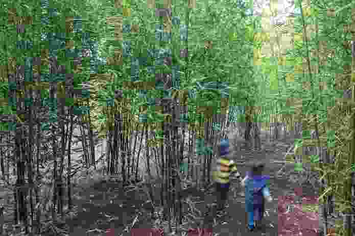 A bamboo forest replete with tunnels invites children to explore, the sounds of the wind through the leaves creating an immersive, multi-sensory experience.