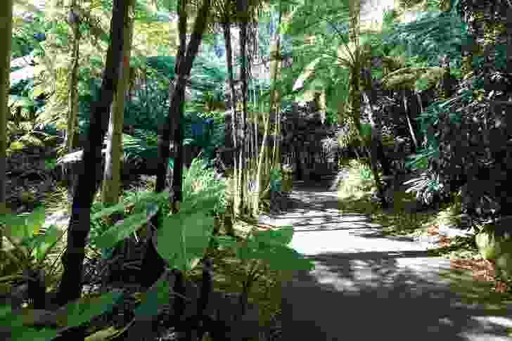 Fern gully features a shaded walking track, which runs alongside a creek.