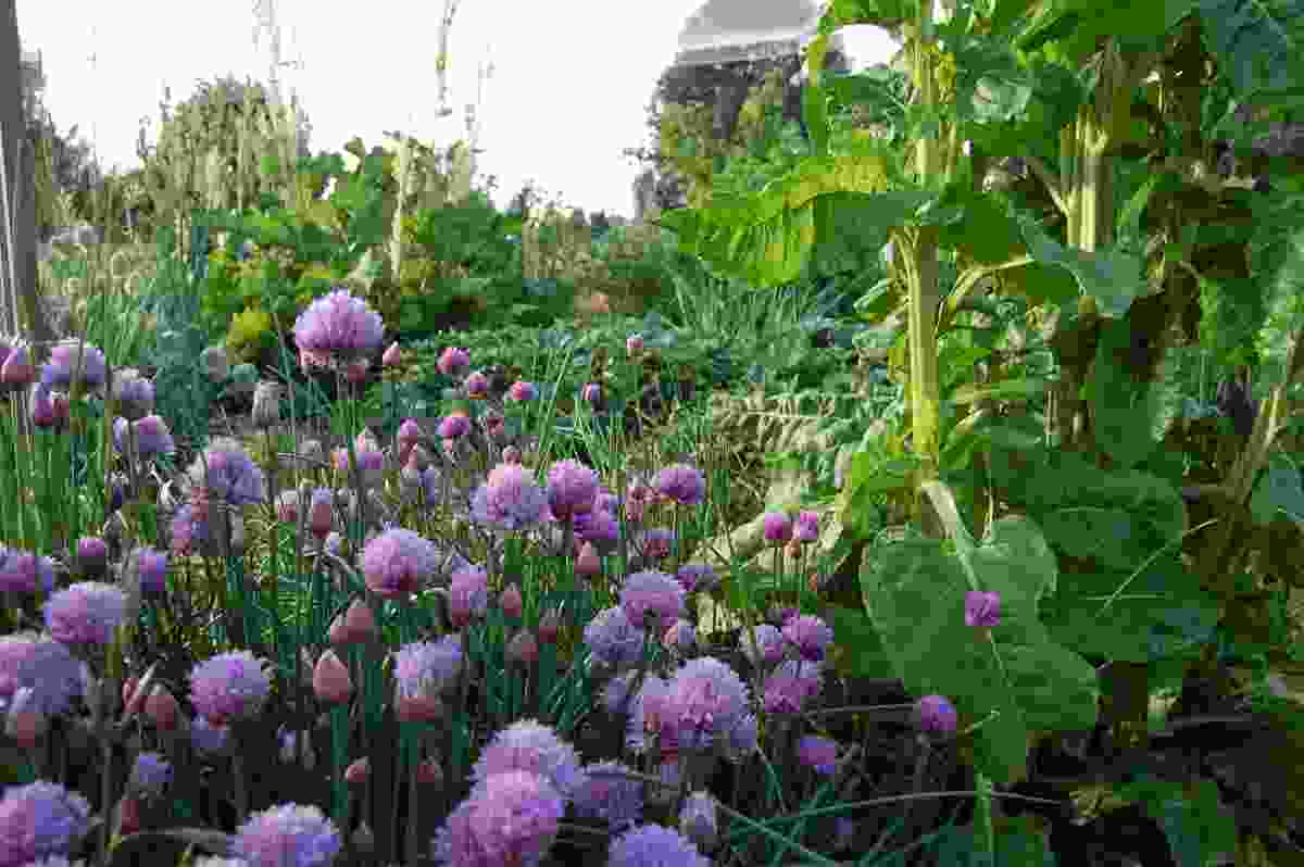 The vegetable garden in spring.