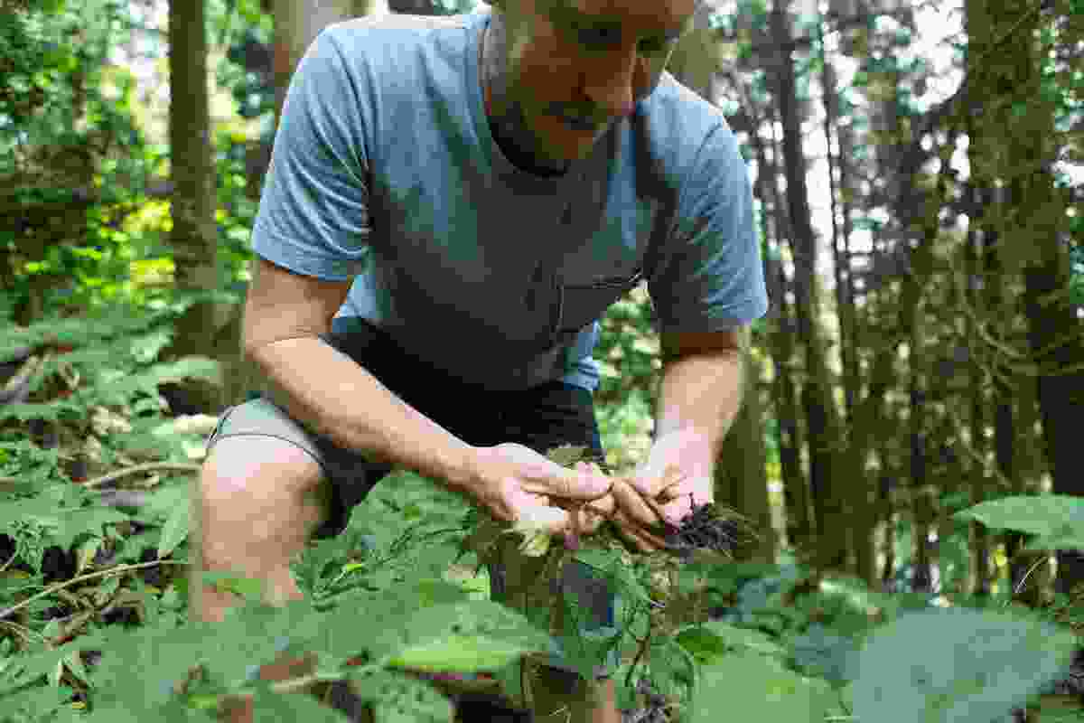 Artist Andy Rewald foraging in the nearby forest.
