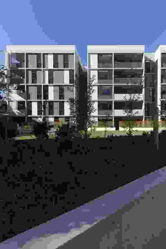 Dunstan Grove by Architectus.