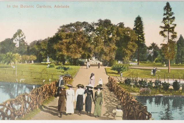 In the Botanic Gardens, Adelaide. 