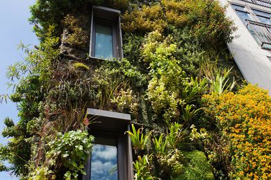 Green walls may pollute offices in heat