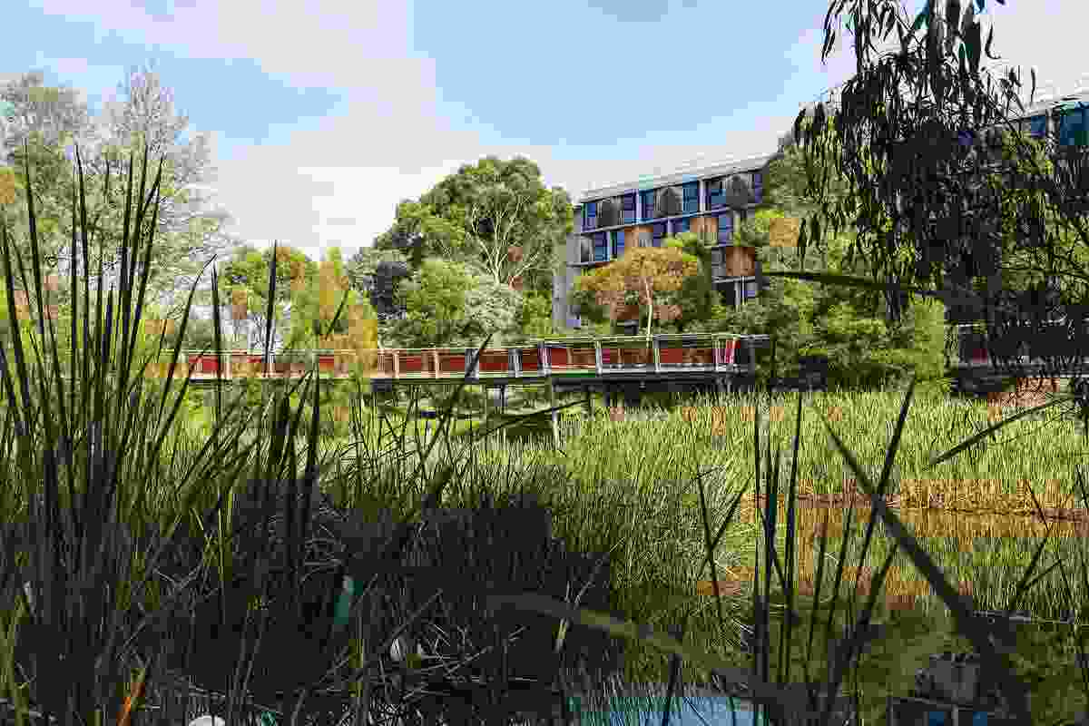 Designed by Urban Initiatives, the Jock Marshall Reserve Nature Walk draws a formerly overlooked green space into everyday student life.
