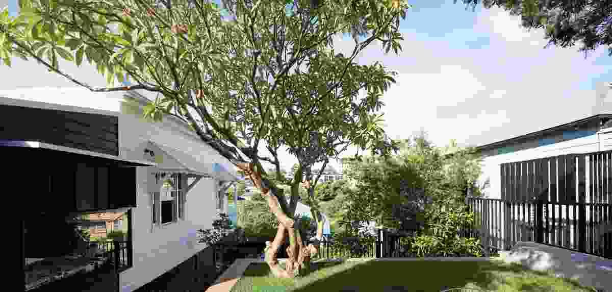 The raised garden terrace enjoys the shade of the frangipani tree.